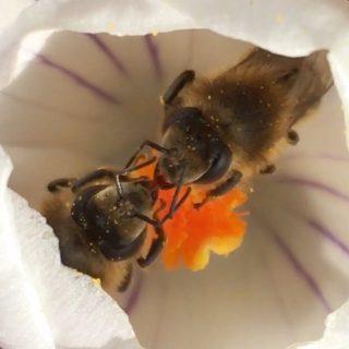 """Amrumer Inselbienen nehmen sich Zeit für einen """"Schnack"""""""