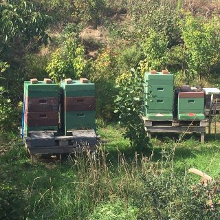 Bienenbeuten auf Amrum